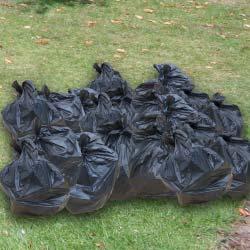20-bin-bags