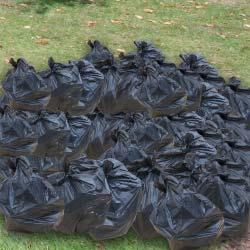 60-bin-bags