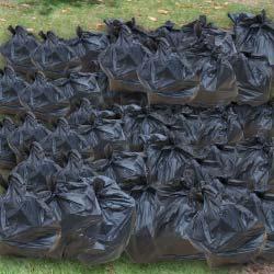 80-bin-bags